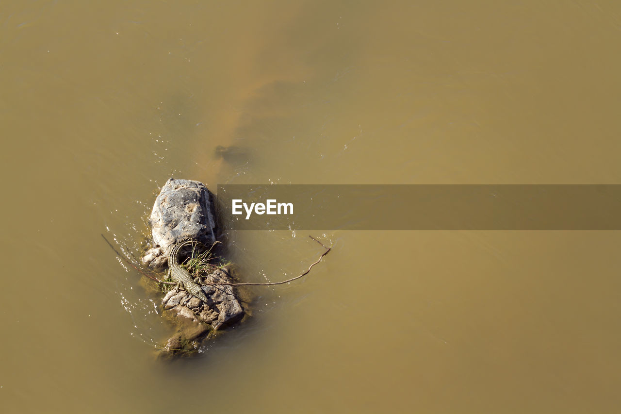 HIGH ANGLE VIEW OF SPIDER IN THE LAKE