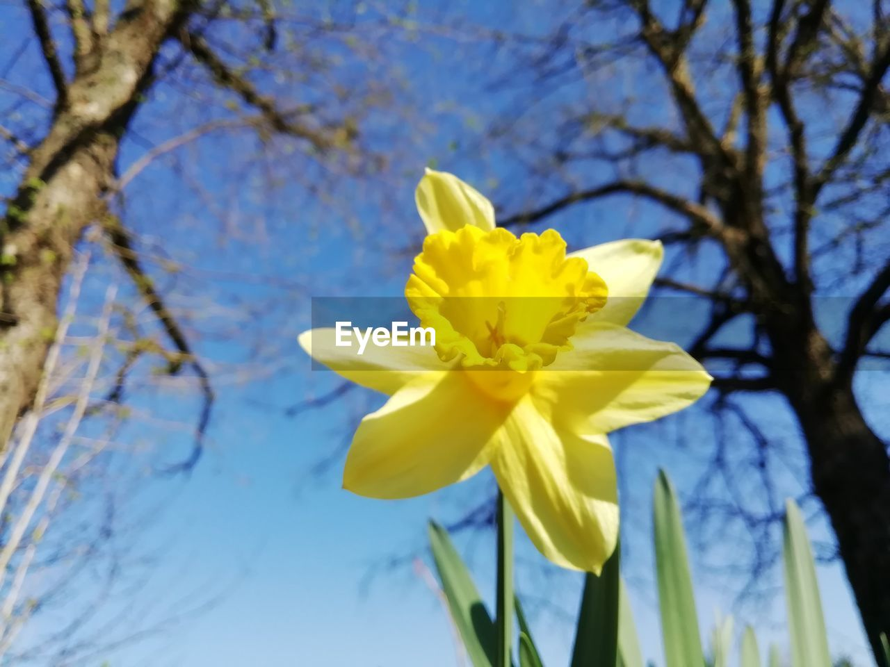 plant, flowering plant, flower, yellow, vulnerability, beauty in nature, fragility, freshness, growth, flower head, petal, tree, inflorescence, close-up, nature, focus on foreground, low angle view, branch, day, no people, springtime, outdoors