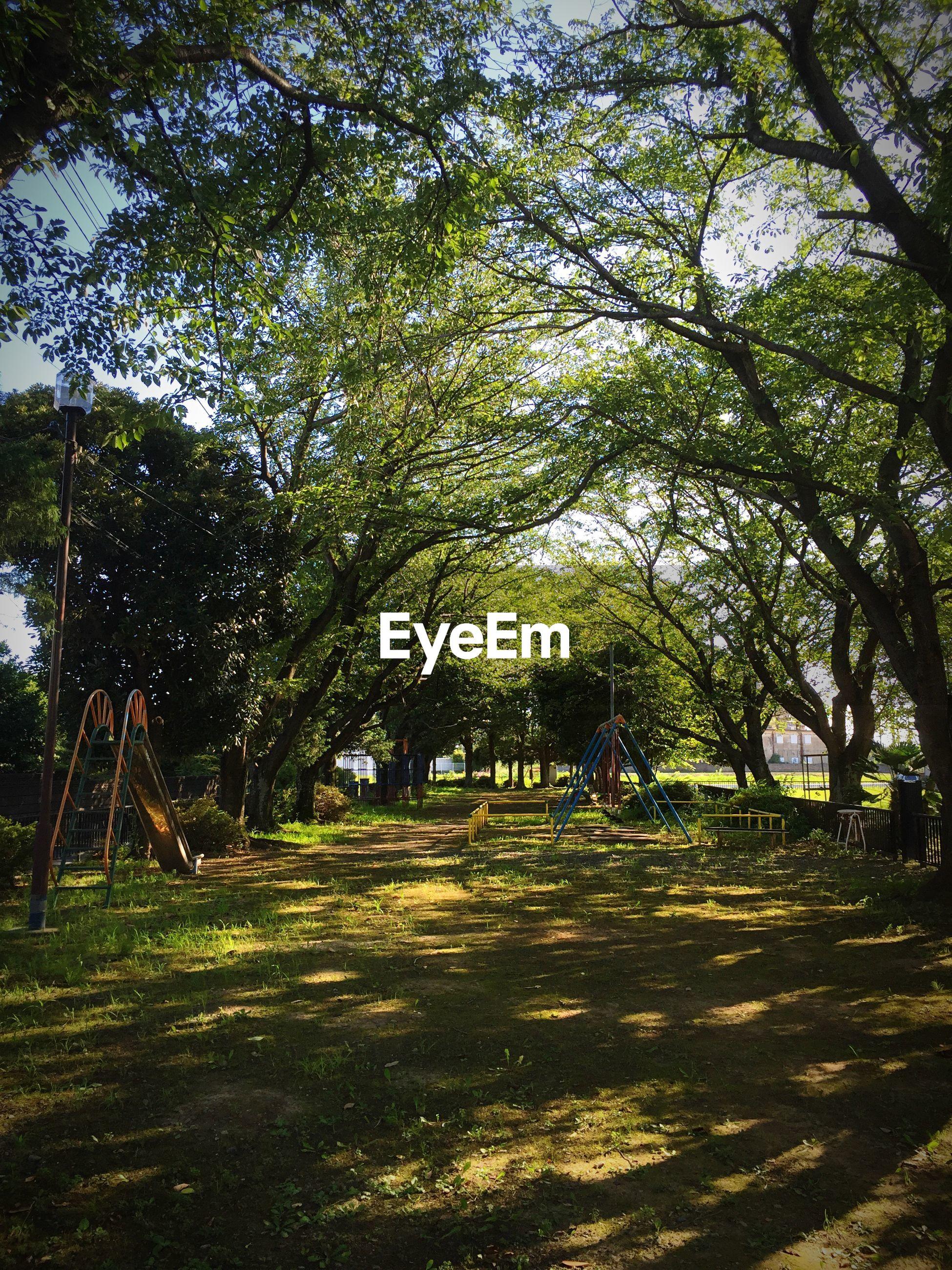 Slides amidst trees on playground