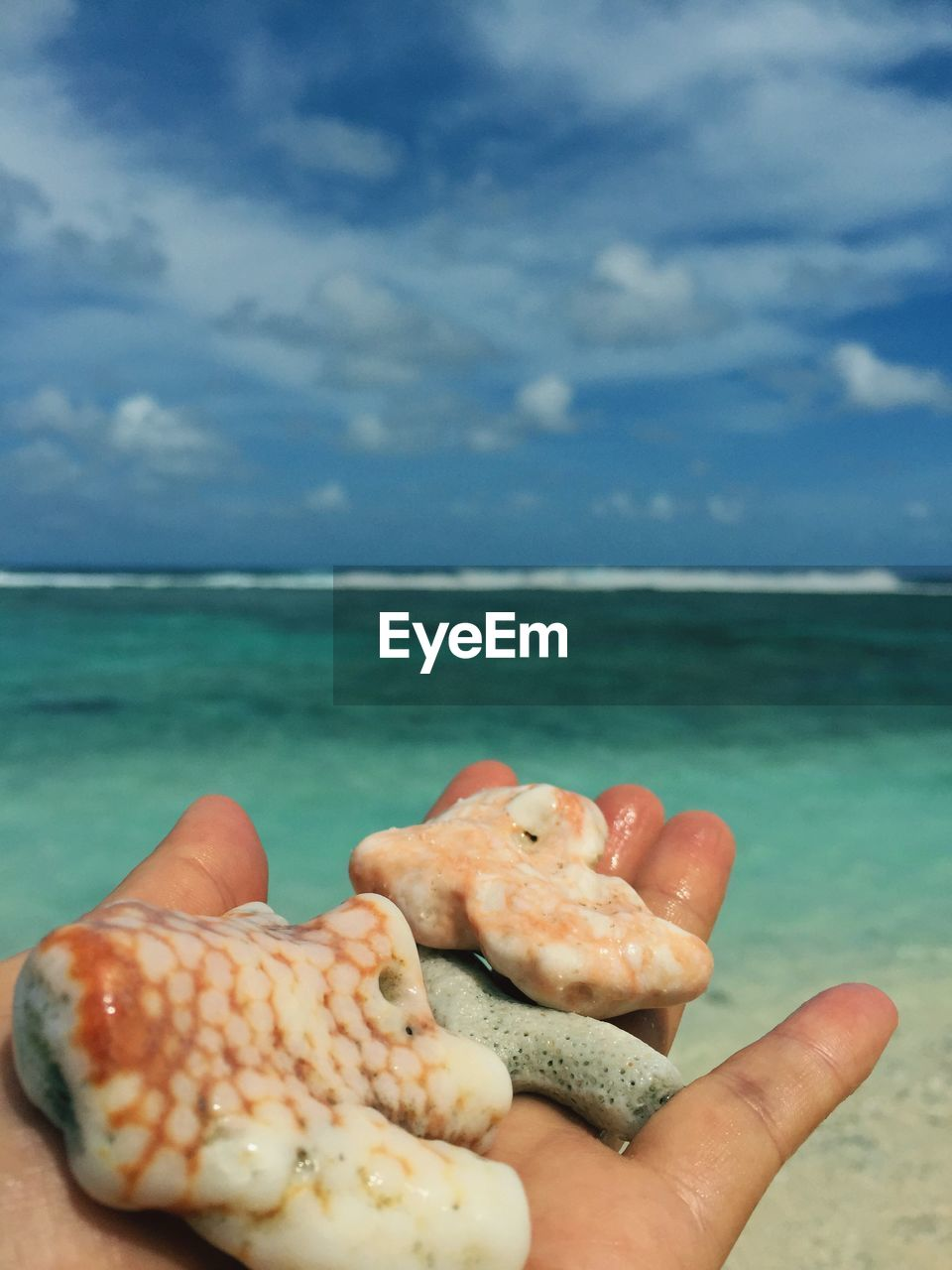 Close-Up Of Person Hand Holding Seashells On Beach