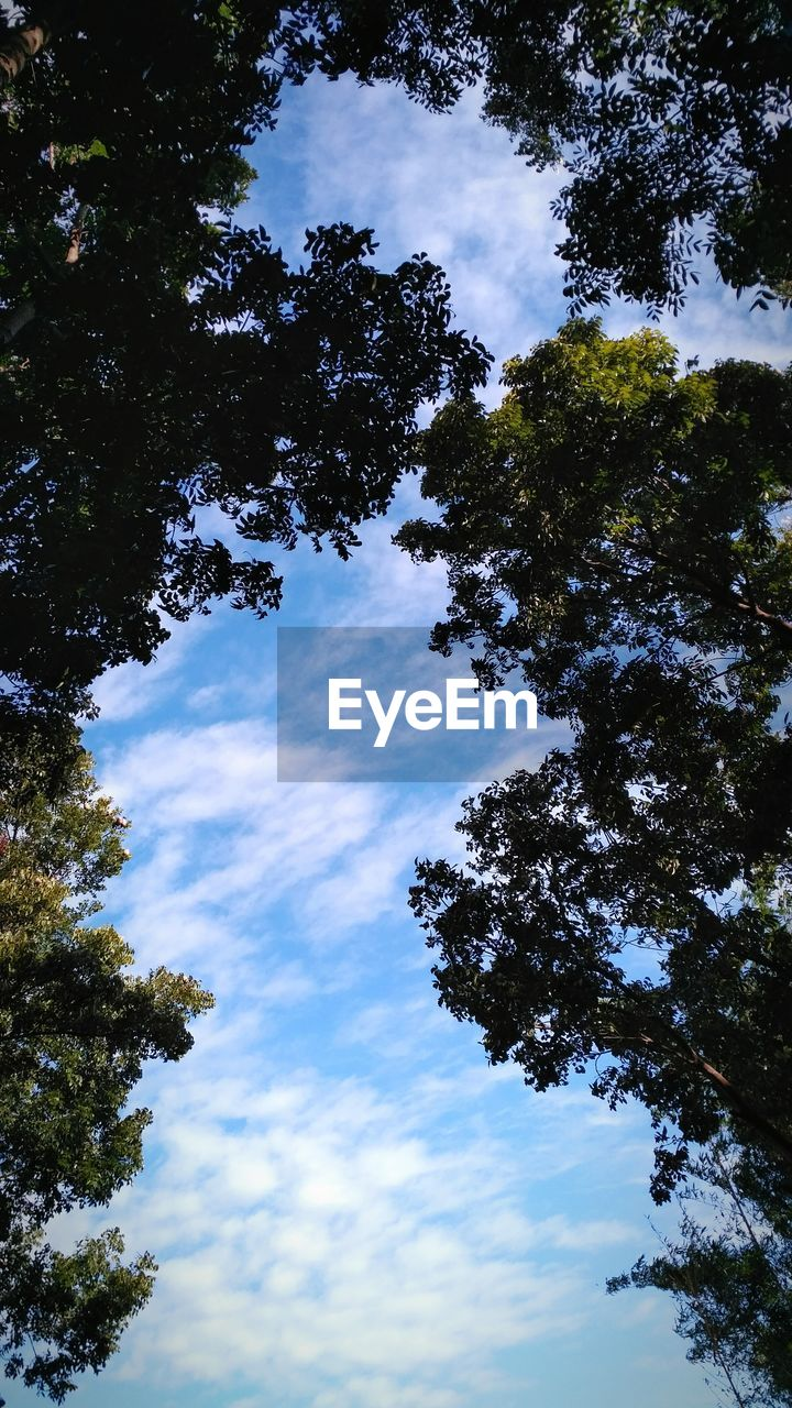 tree, low angle view, sky, nature, beauty in nature, cloud - sky, day, outdoors, tranquility, no people, growth, scenics, branch, hope
