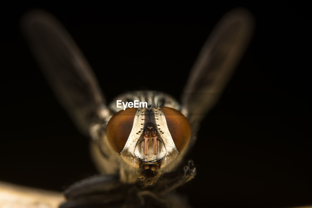 Close-up of insect against black background