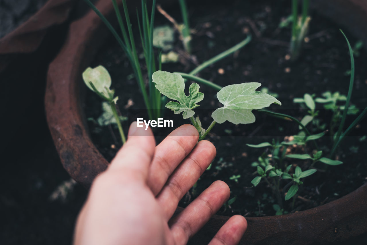 Cropped image of hand gesturing on plant