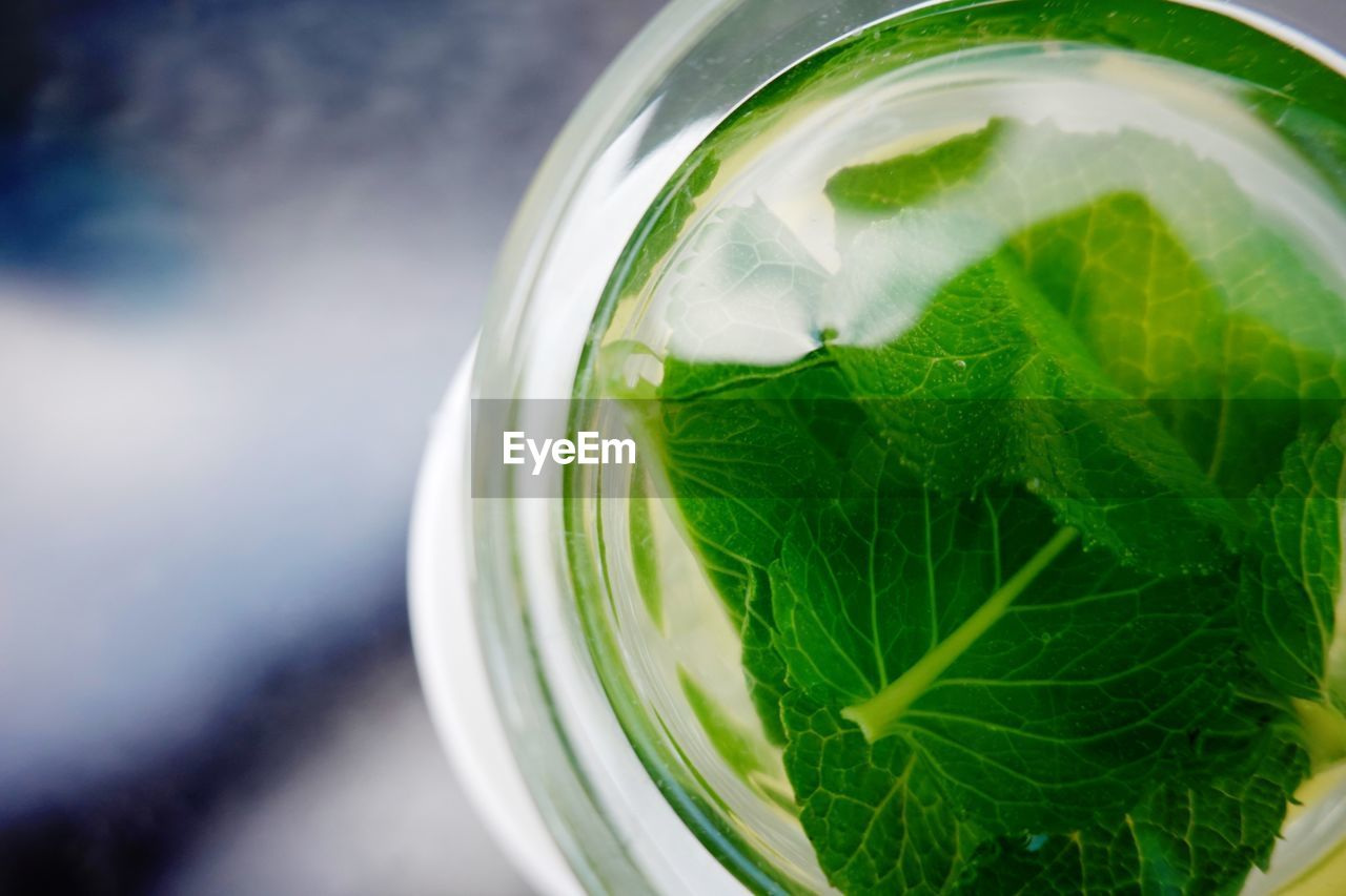 drink, food and drink, refreshment, leaf, herb, drinking glass, mint leaf - culinary, glass, plant part, close-up, glass - material, household equipment, green color, no people, food, freshness, still life, nature, healthy eating, citrus fruit, mojito