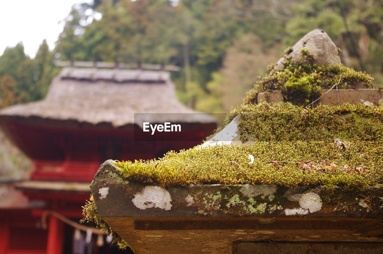 focus on foreground, plant, no people, architecture, day, moss, built structure, nature, close-up, growth, building, religion, belief, outdoors, place of worship, green color, building exterior, tree, spirituality, roof tile, lichen