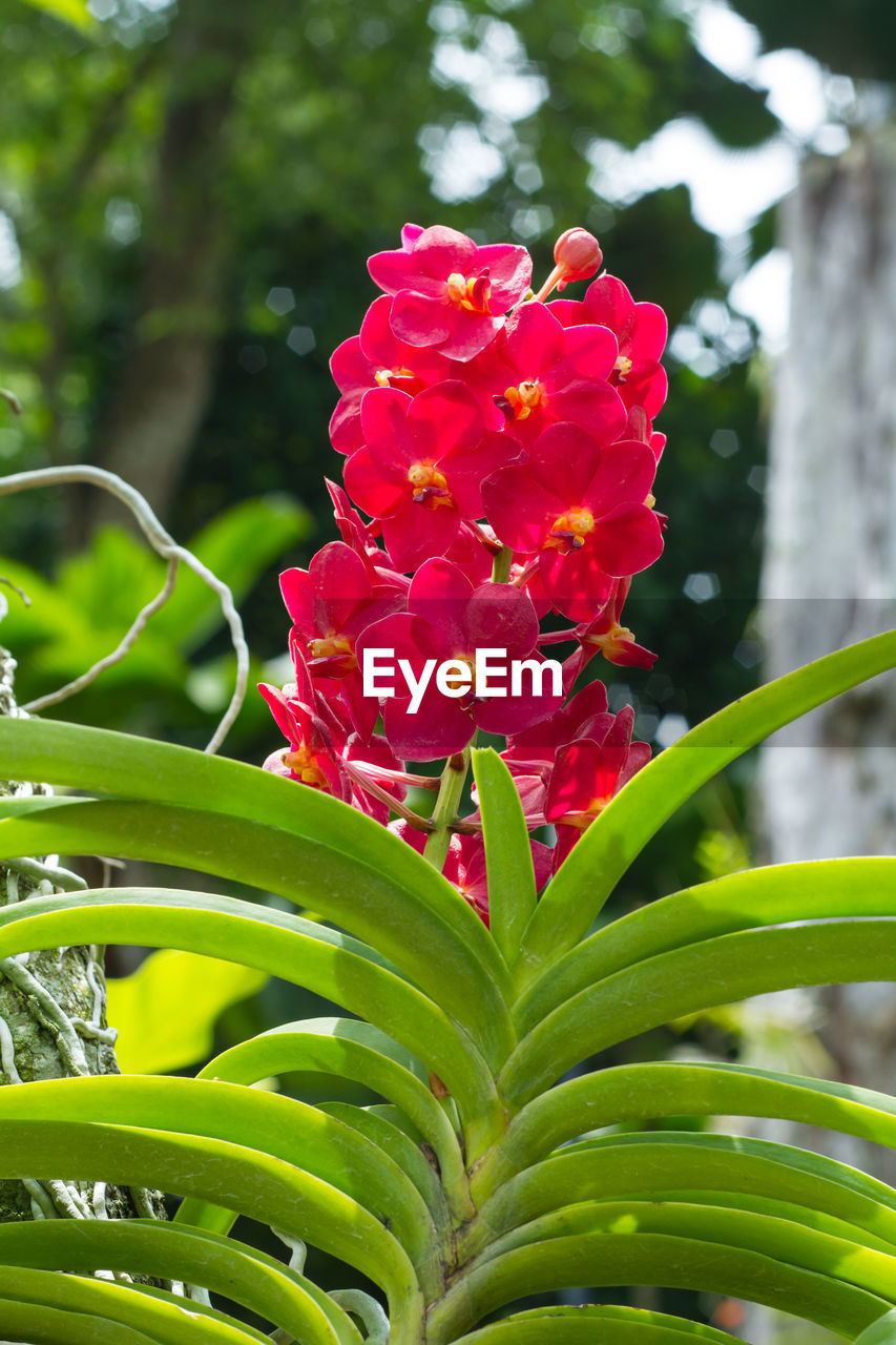 flowering plant, flower, plant, growth, vulnerability, beauty in nature, fragility, freshness, petal, close-up, plant part, leaf, inflorescence, focus on foreground, nature, flower head, day, pink color, green color, no people, outdoors