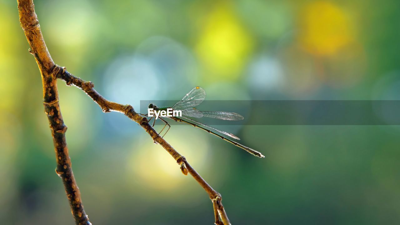 focus on foreground, plant, close-up, no people, nature, day, growth, twig, beauty in nature, branch, plant stem, invertebrate, outdoors, selective focus, tree, insect, one animal, animal wildlife, animal, green color