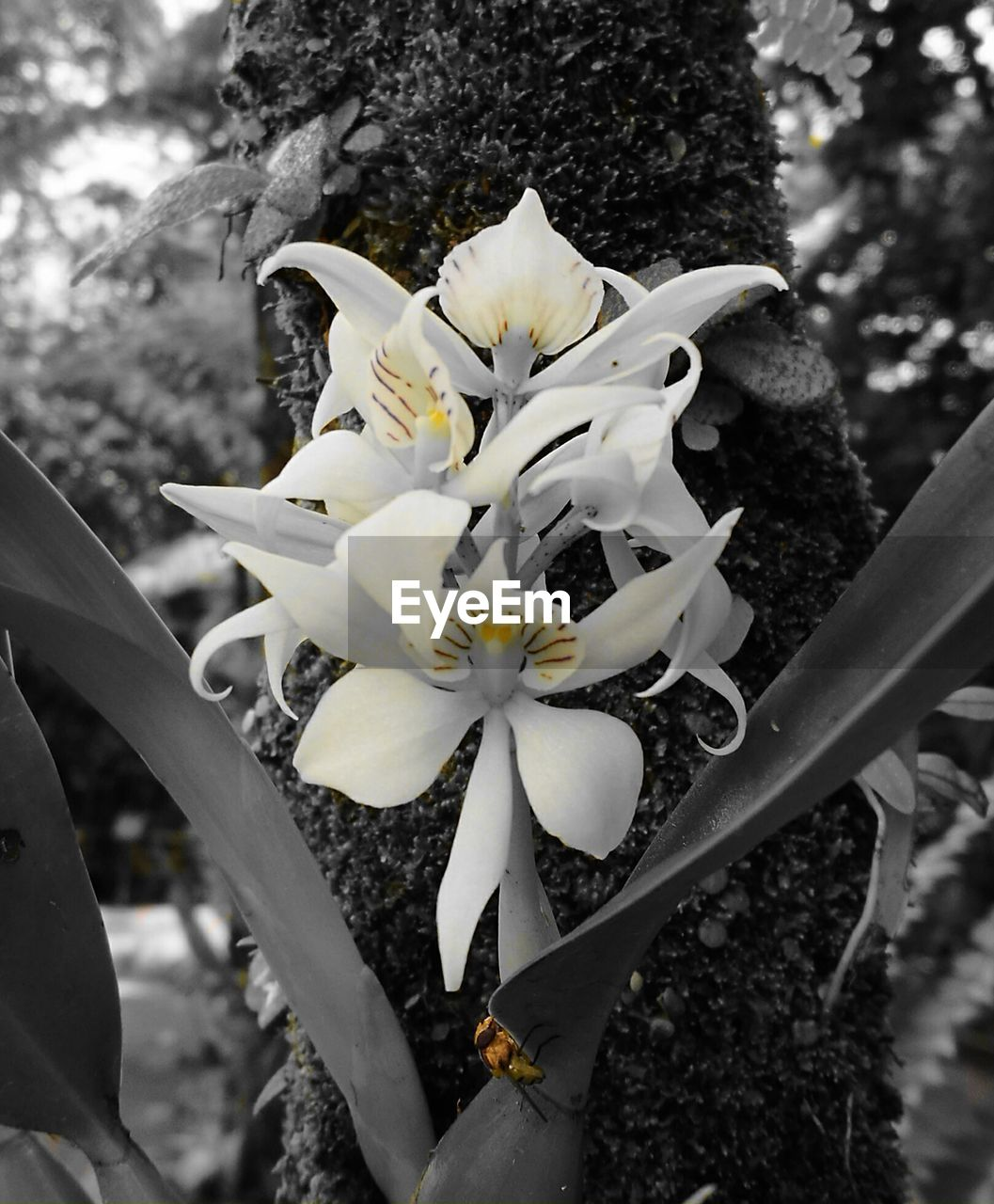 flower, tree, growth, fragility, nature, blossom, petal, beauty in nature, white color, botany, day, flower head, freshness, outdoors, close-up, branch, plant, springtime, no people, focus on foreground, blooming
