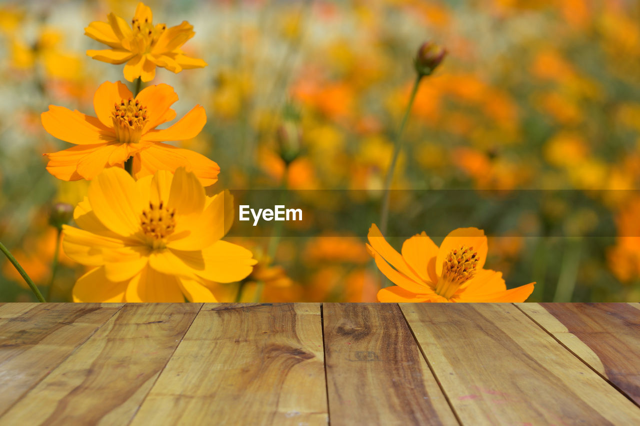 flower, yellow, petal, nature, flower head, fragility, growth, wood - material, beauty in nature, freshness, no people, close-up, plant, blooming, day, outdoors