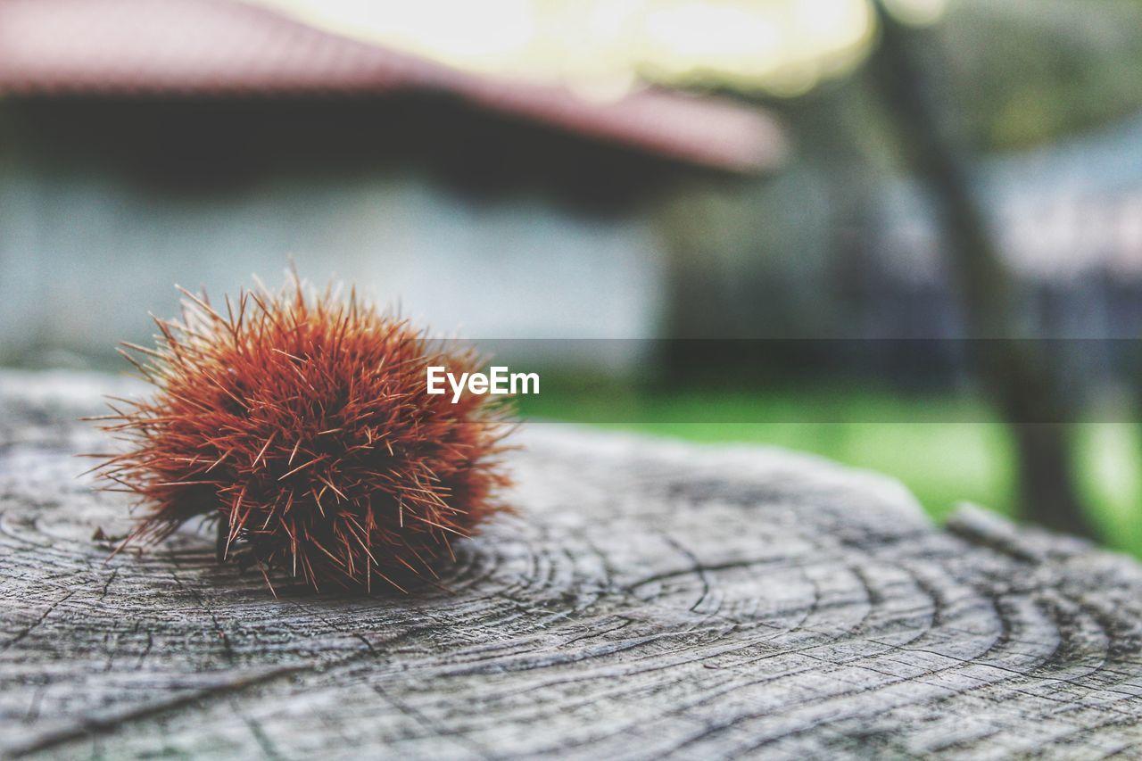Close-up of sea urchin on tree stump
