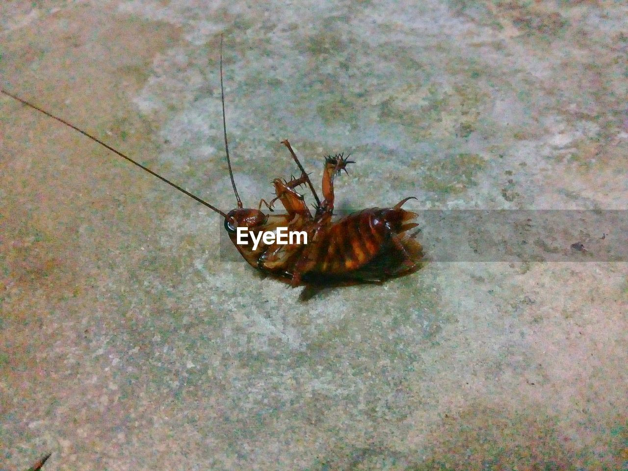 one animal, animal themes, animal, animal wildlife, animals in the wild, invertebrate, insect, high angle view, no people, nature, day, close-up, animal body part, outdoors, arthropod, zoology, animal antenna, full length