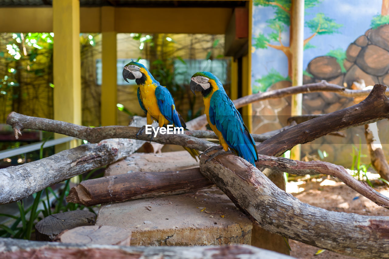 vertebrate, animal, animal themes, animal wildlife, branch, tree, group of animals, perching, bird, animals in the wild, focus on foreground, two animals, parrot, day, no people, plant, nature, wood - material, outdoors, beauty in nature