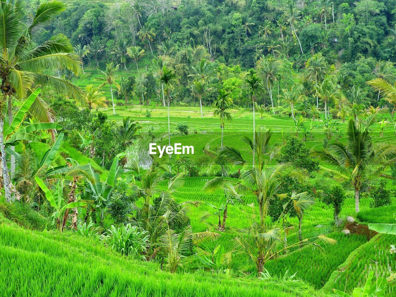 grass, nature, growth, green color, field, plant, no people, beauty in nature, tranquil scene, outdoors, tranquility, agriculture, lush foliage, landscape, day, tree, scenics, leaf, rice paddy, forest, animal themes
