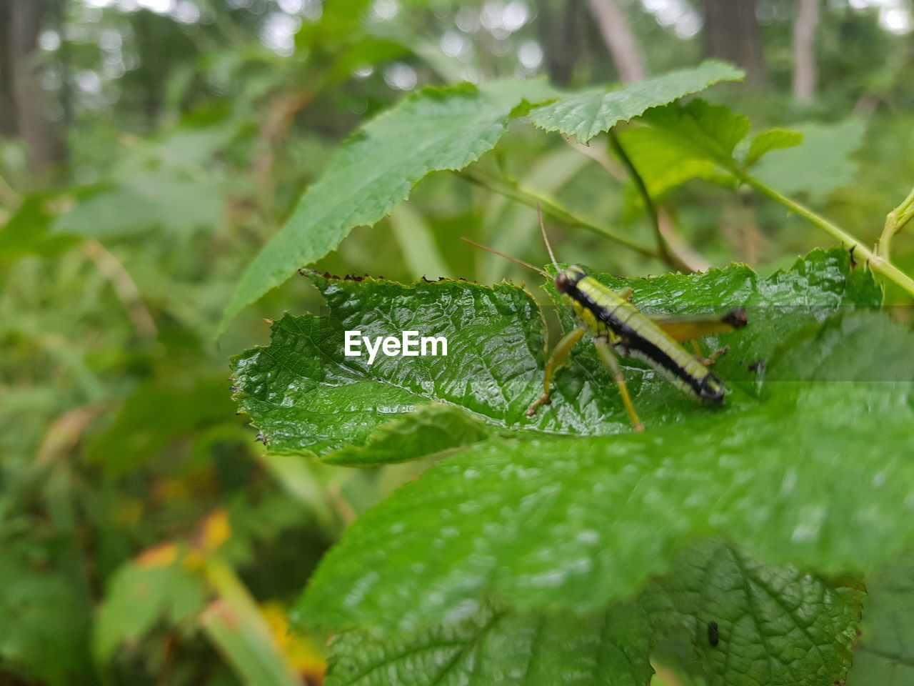 leaf, plant part, green color, animal, animal themes, invertebrate, insect, animal wildlife, one animal, animals in the wild, plant, nature, close-up, selective focus, growth, no people, day, beauty in nature, outdoors, animal body part, leaves
