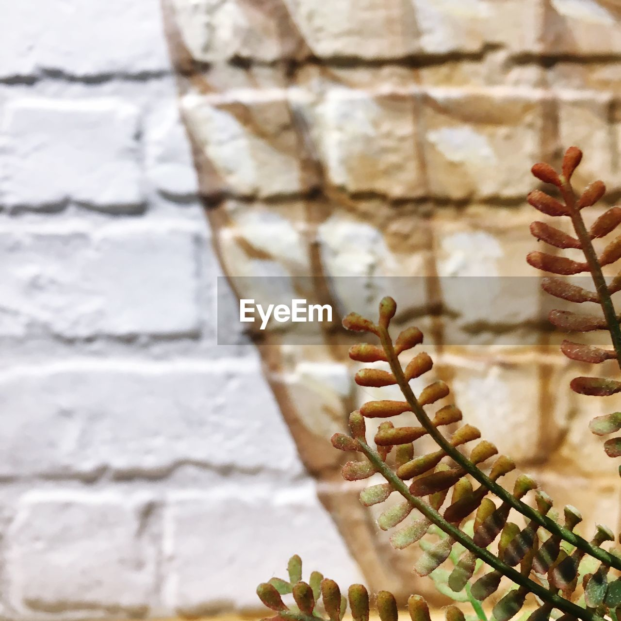 close-up, no people, day, wall - building feature, focus on foreground, nature, wall, built structure, pattern, outdoors, architecture, white color, one animal, solid, textured, animal themes, stone wall