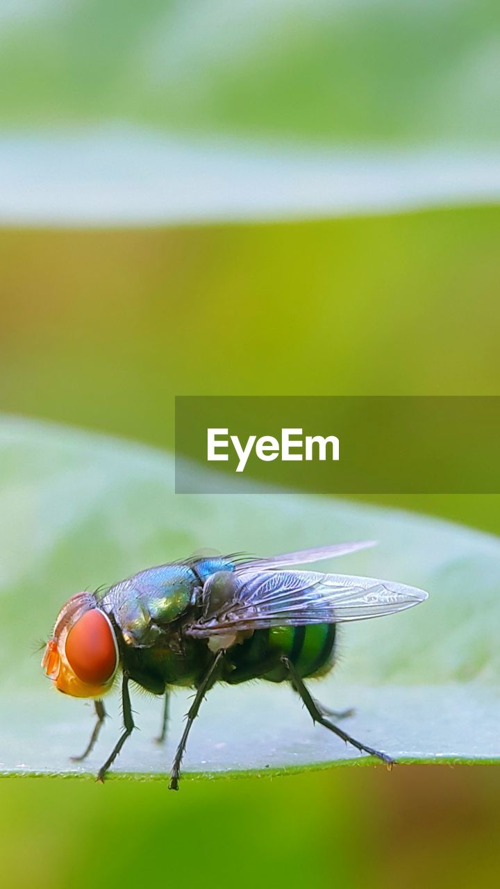 insect, one animal, animal themes, animals in the wild, focus on foreground, animal wildlife, nature, day, outdoors, no people, close-up, damselfly
