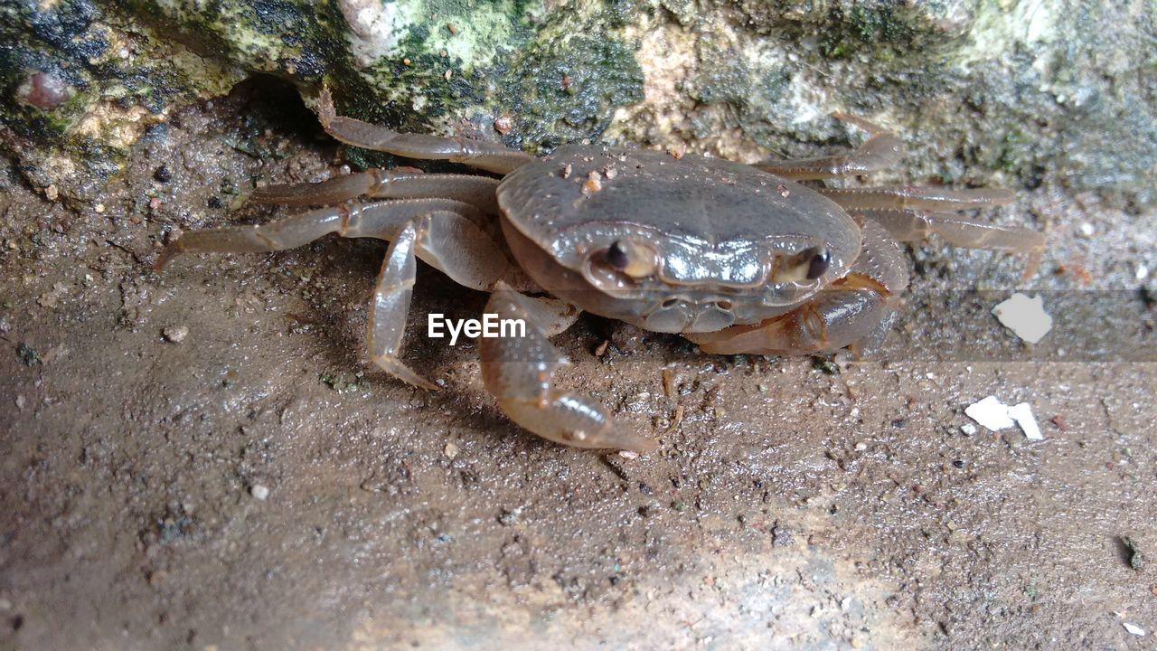 High angle view of crab on ground