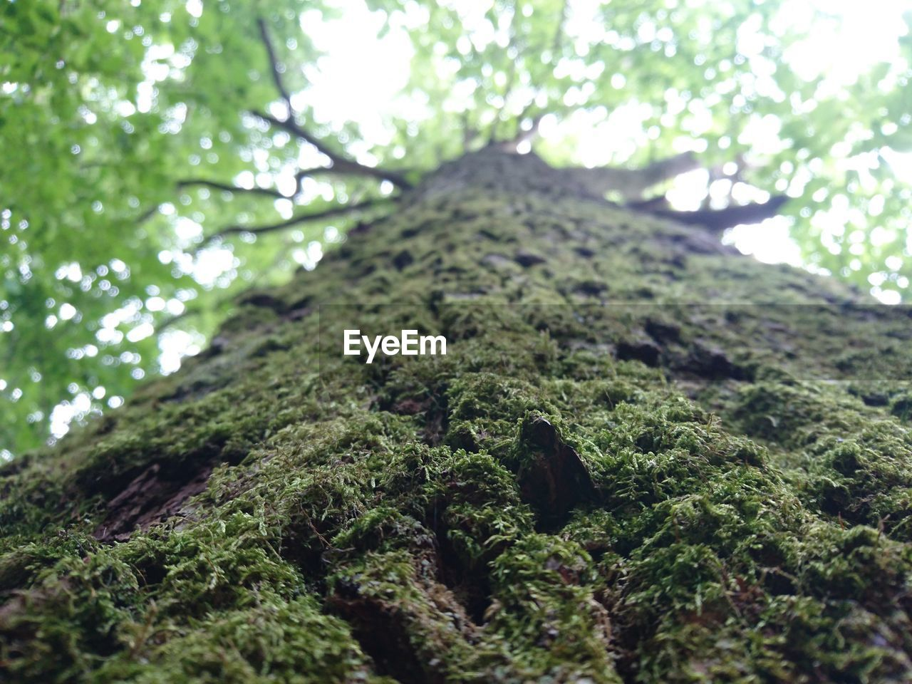 nature, green color, day, growth, no people, forest, beauty in nature, outdoors, low angle view, tree, close-up, animal themes