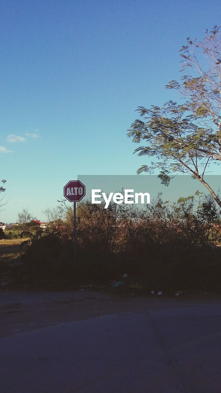tree, communication, road sign, road, day, outdoors, transportation, blue, clear sky, bare tree, sky, nature, no people, basketball - sport
