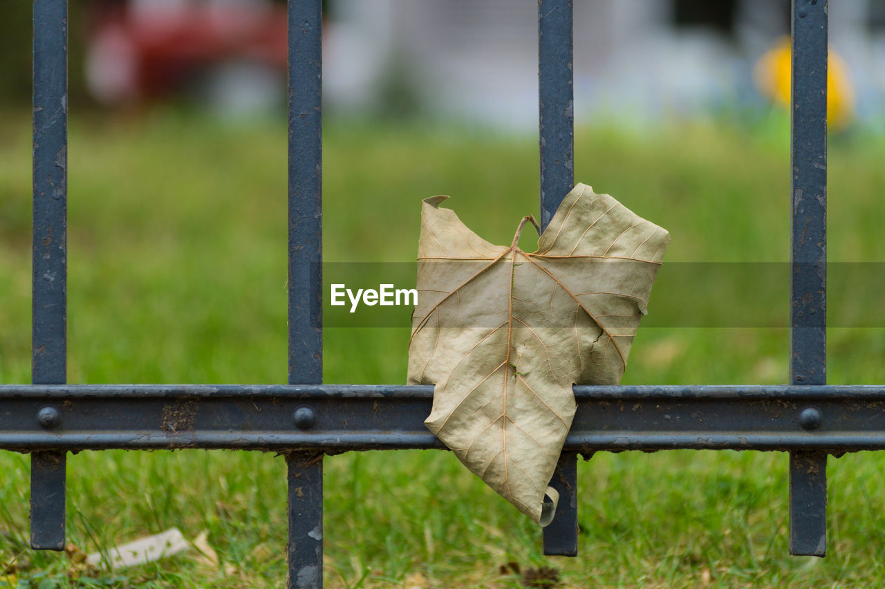 Close-up of fallen dry leaf on metallic fence at park