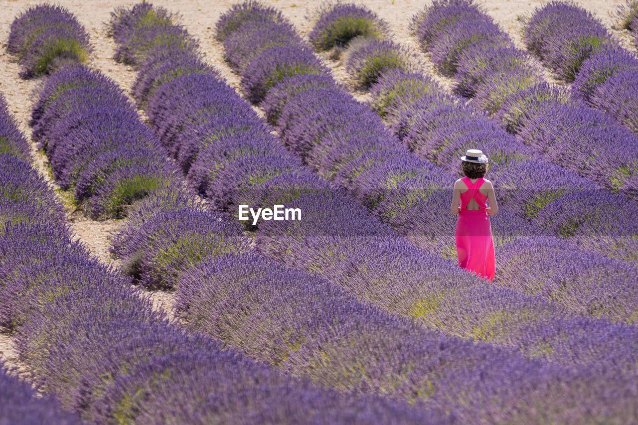 Full Frame Shot Of Lavender Flowers On Field