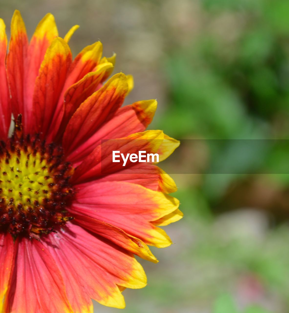 flower, petal, beauty in nature, fragility, nature, flower head, growth, close-up, focus on foreground, freshness, blooming, no people, pollen, outdoors, yellow, plant, day