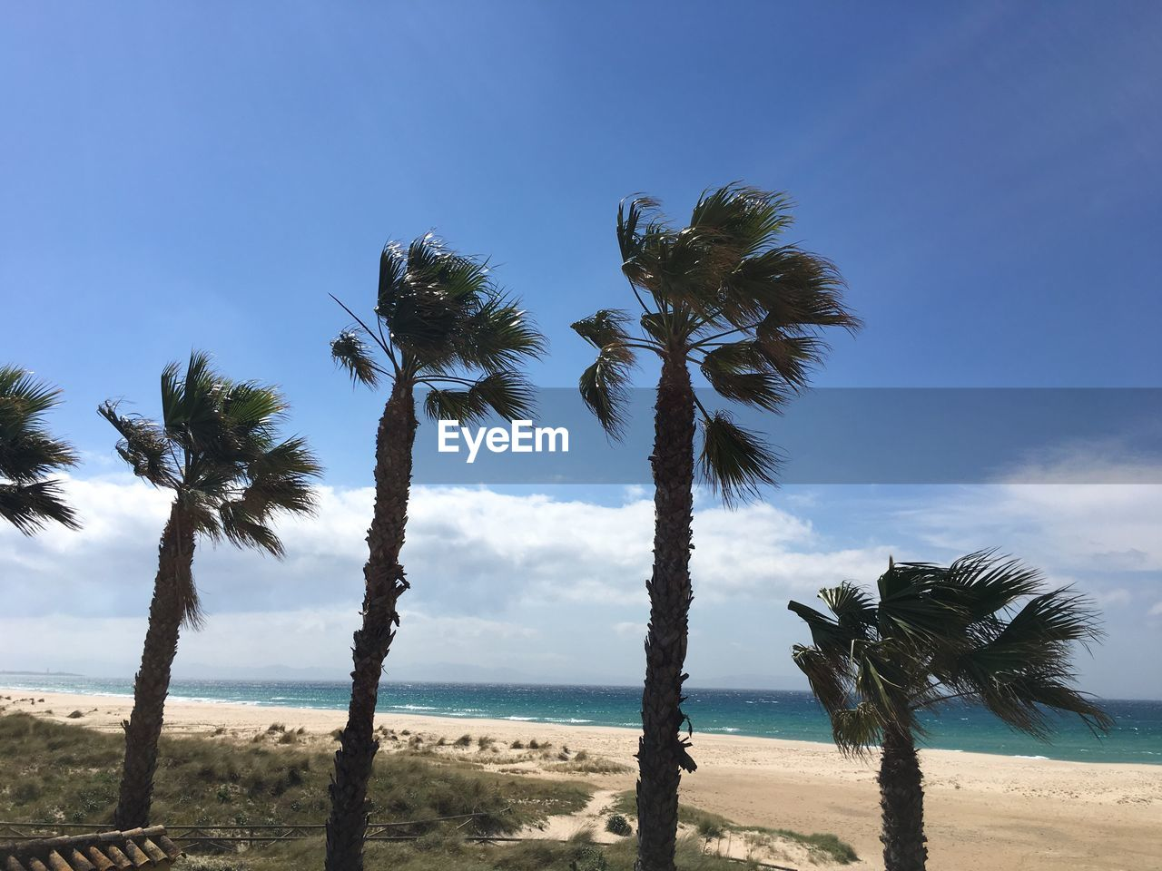 palm tree, beach, tree, sea, nature, beauty in nature, scenics, tranquil scene, tranquility, tree trunk, sand, sky, horizon over water, growth, outdoors, water, day, no people, landscape