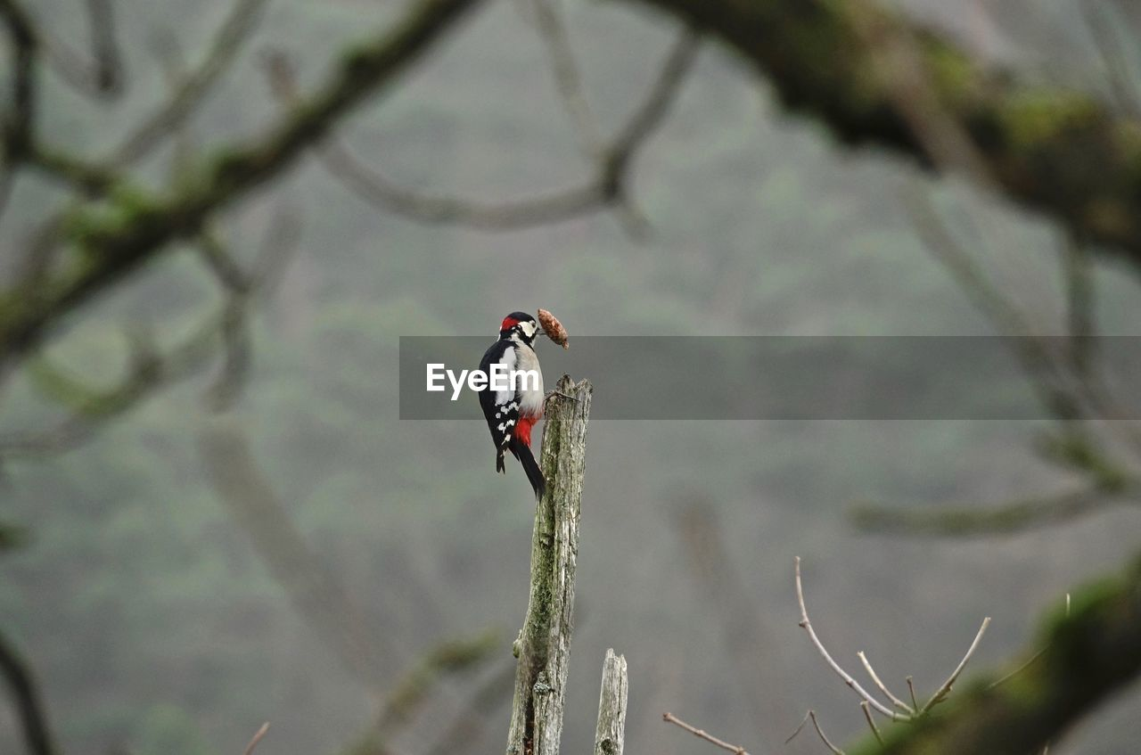 animals in the wild, animal wildlife, animal, vertebrate, animal themes, bird, one animal, plant, perching, focus on foreground, branch, tree, day, no people, nature, outdoors, zoology, woodpecker, beauty in nature, kingfisher
