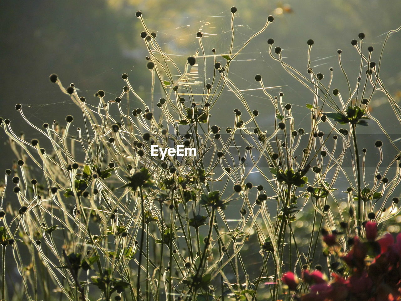 growth, nature, plant, beauty in nature, no people, flower, freshness, field, outdoors, day, fragility, close-up