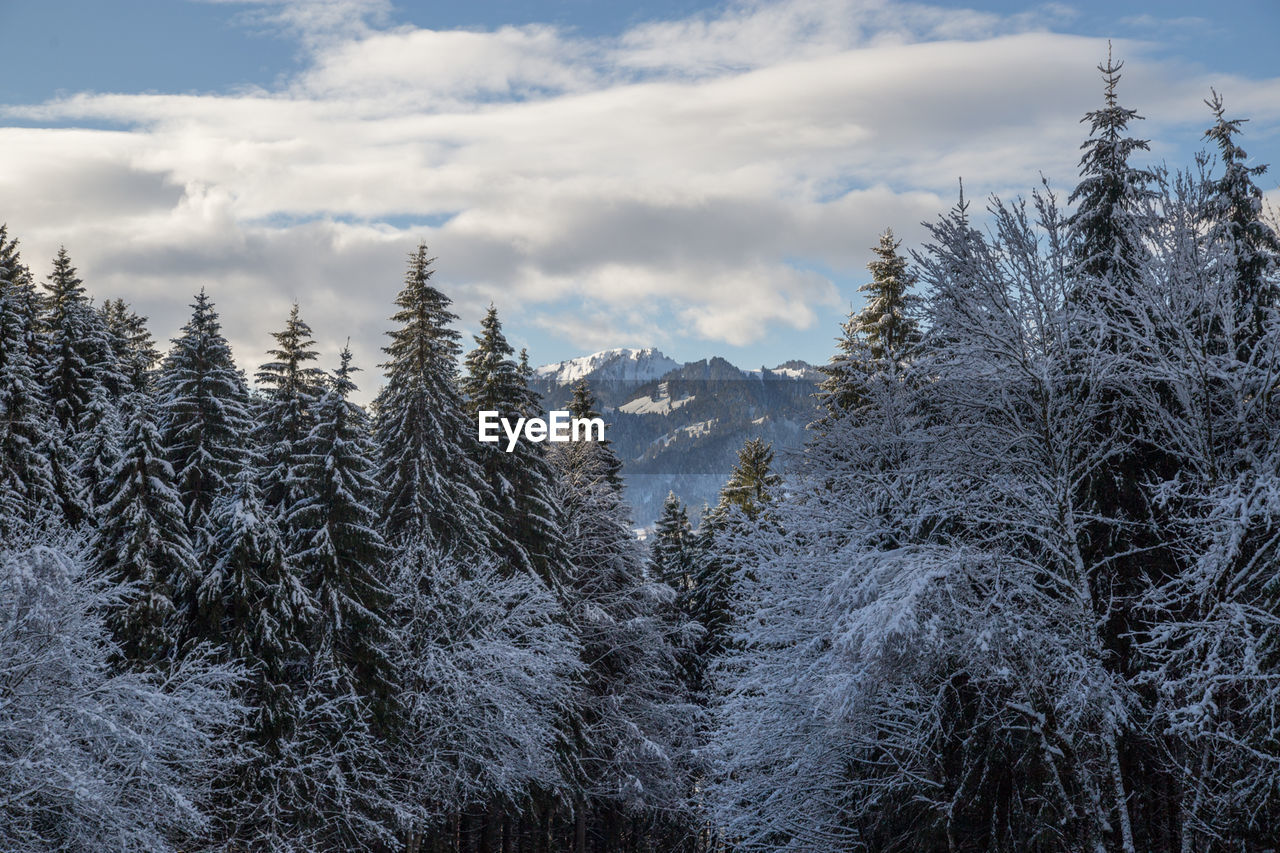 nature, tree, cold temperature, winter, snow, tranquility, no people, beauty in nature, tranquil scene, outdoors, sky, scenics, landscape, cloud - sky, day, pine tree, mountain, growth, forest, range