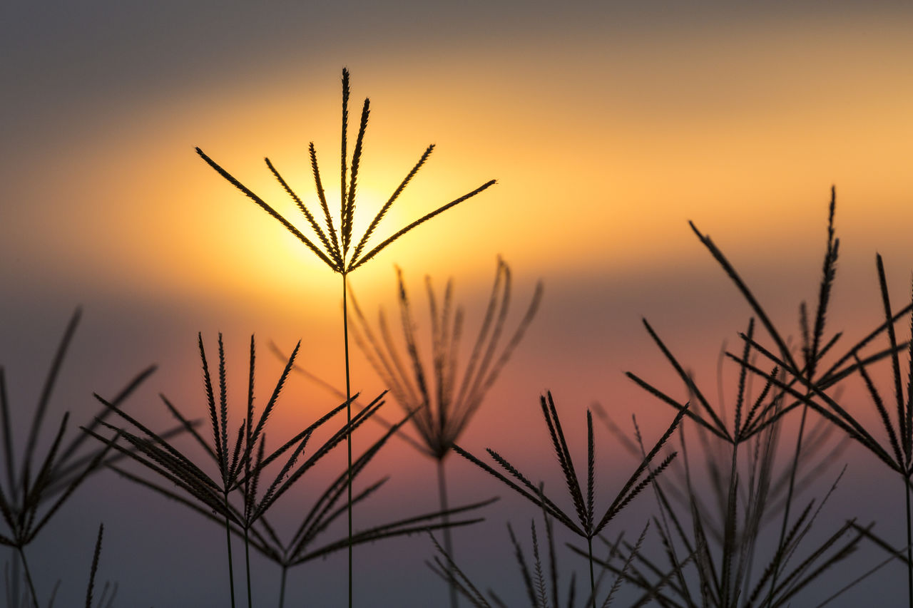 sunset, beauty in nature, plant, sky, growth, tranquility, orange color, nature, focus on foreground, silhouette, close-up, no people, tranquil scene, scenics - nature, outdoors, plant stem, sun, fragility, leaf, idyllic, stalk, blade of grass, timothy grass