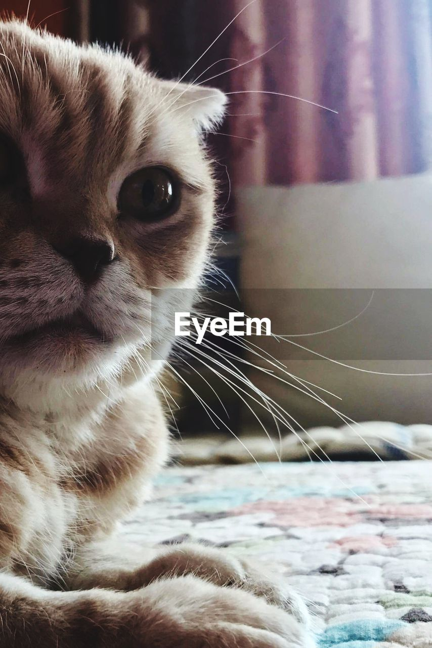 cat, domestic cat, feline, domestic, mammal, domestic animals, animal themes, one animal, pets, animal, vertebrate, close-up, whisker, looking, looking away, indoors, no people, focus on foreground, bed, home interior, animal head, animal eye