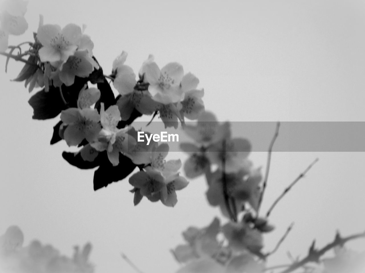 flower, fragility, growth, nature, beauty in nature, no people, clear sky, freshness, blossom, petal, springtime, tree, close-up, day, plant, outdoors, flower head, sky, blooming, branch