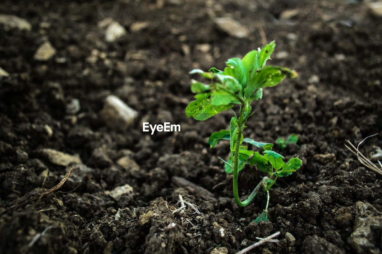 growth, plant, beginnings, nature, green color, new life, leaf, agriculture, no people, sapling, close-up, fragility, day, outdoors, freshness, beauty in nature