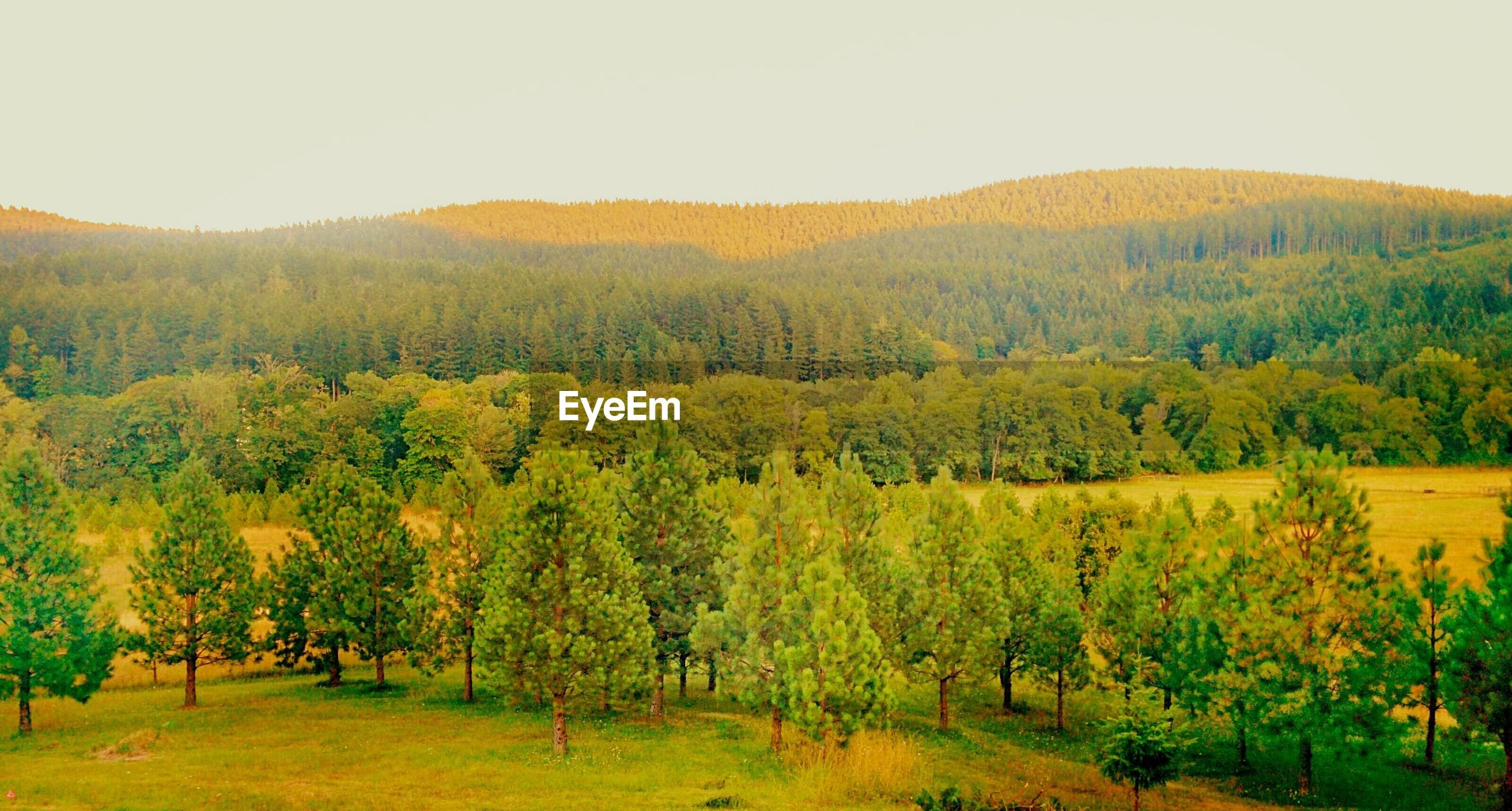SCENIC VIEW OF LANDSCAPE WITH TREES IN BACKGROUND