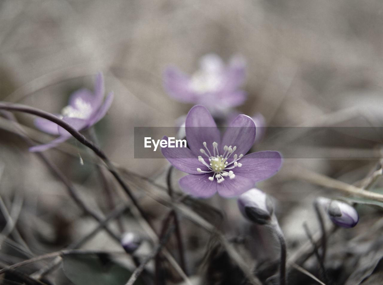 flower, nature, growth, plant, fragility, no people, close-up, petal, beauty in nature, freshness, outdoors, day, flower head, blooming, crocus
