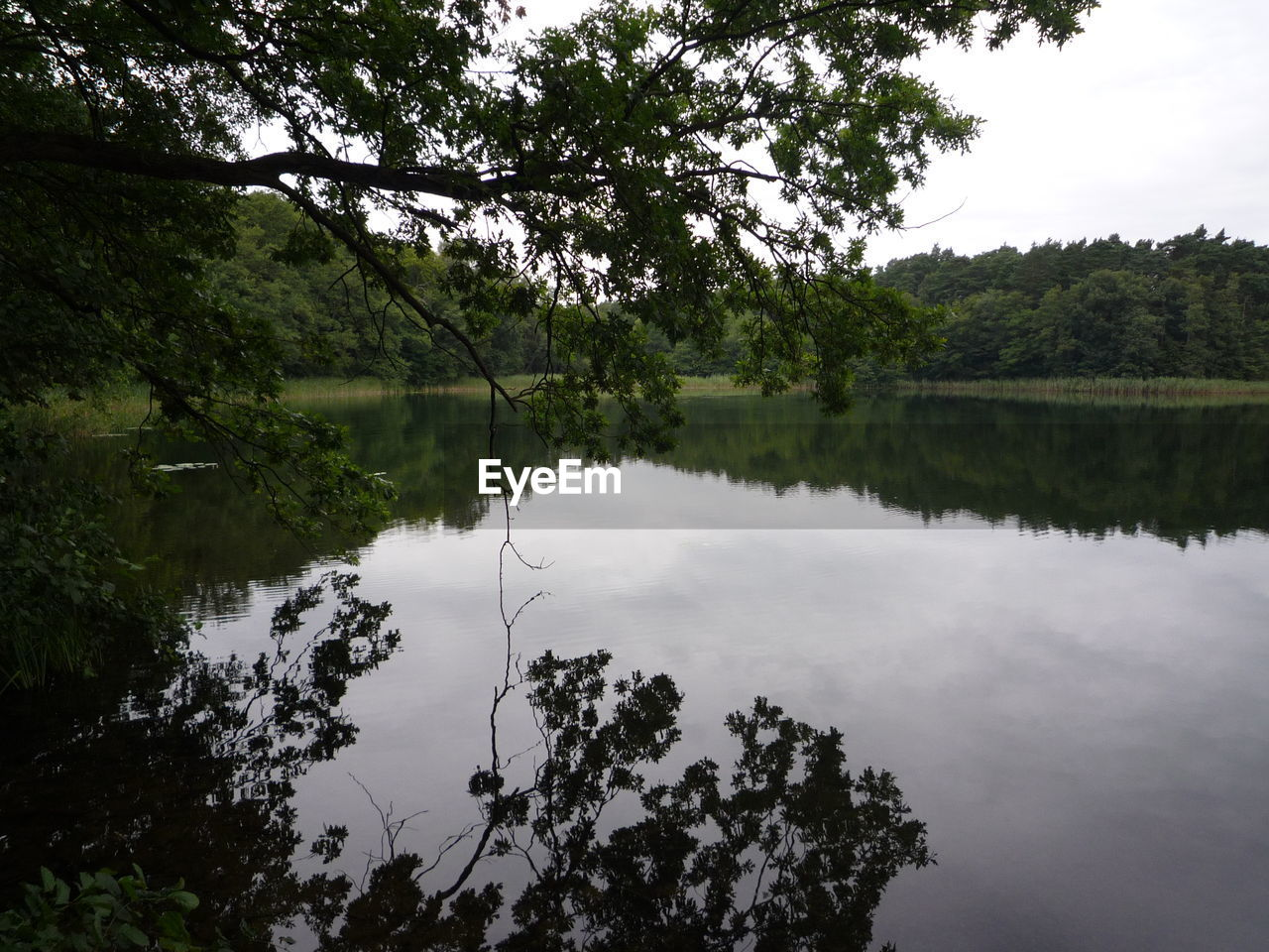 tree, reflection, water, lake, nature, tranquility, beauty in nature, tranquil scene, growth, outdoors, scenics, no people, forest, day, sky