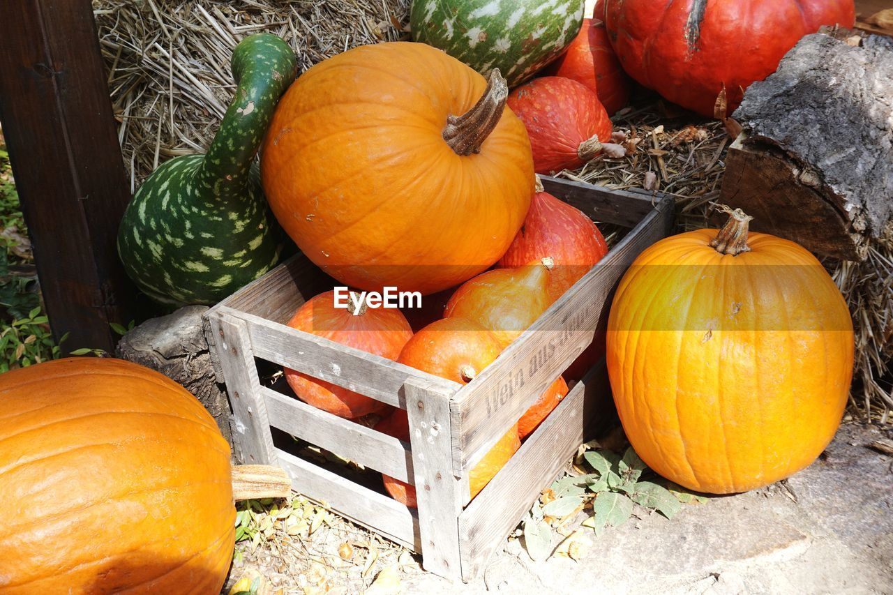 pumpkin, food and drink, vegetable, food, orange color, healthy eating, freshness, still life, wellbeing, no people, high angle view, halloween, autumn, day, wood - material, celebration, nature, outdoors, plant, container