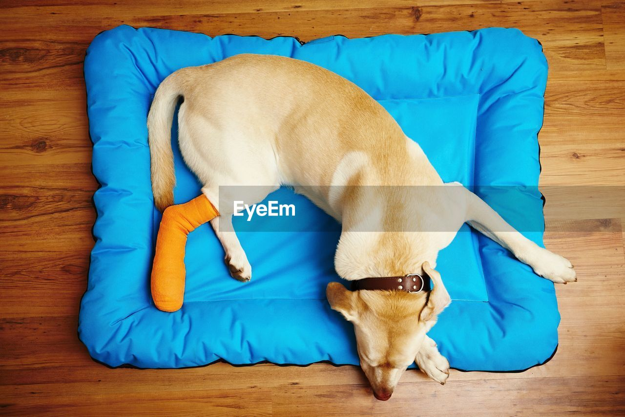 High Angle View Of Dog Sleeping On Pet Bed