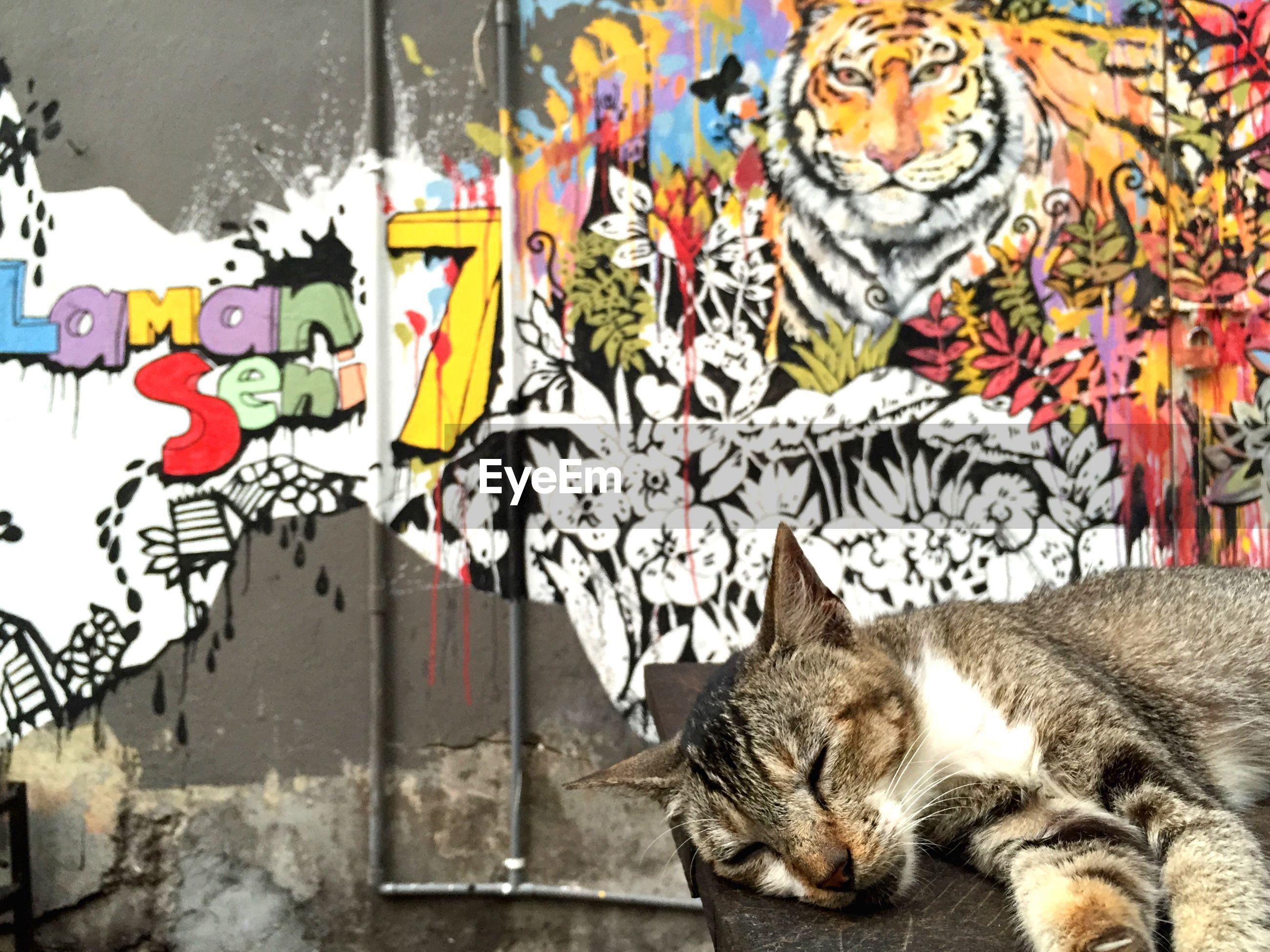 CAT SLEEPING ON WALL
