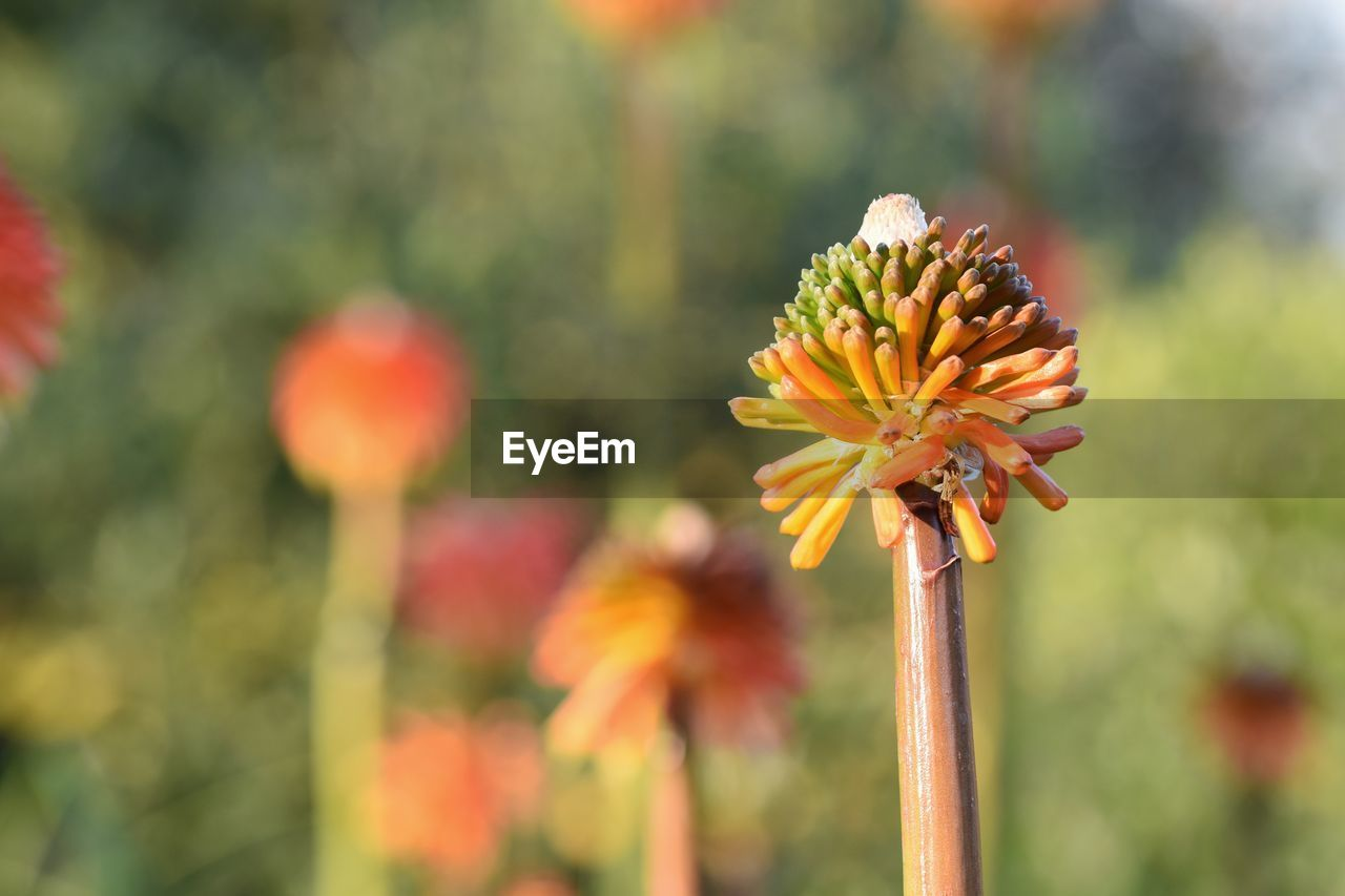 flowering plant, flower, plant, fragility, vulnerability, beauty in nature, focus on foreground, growth, close-up, freshness, flower head, petal, inflorescence, yellow, day, no people, plant stem, nature, botany, outdoors