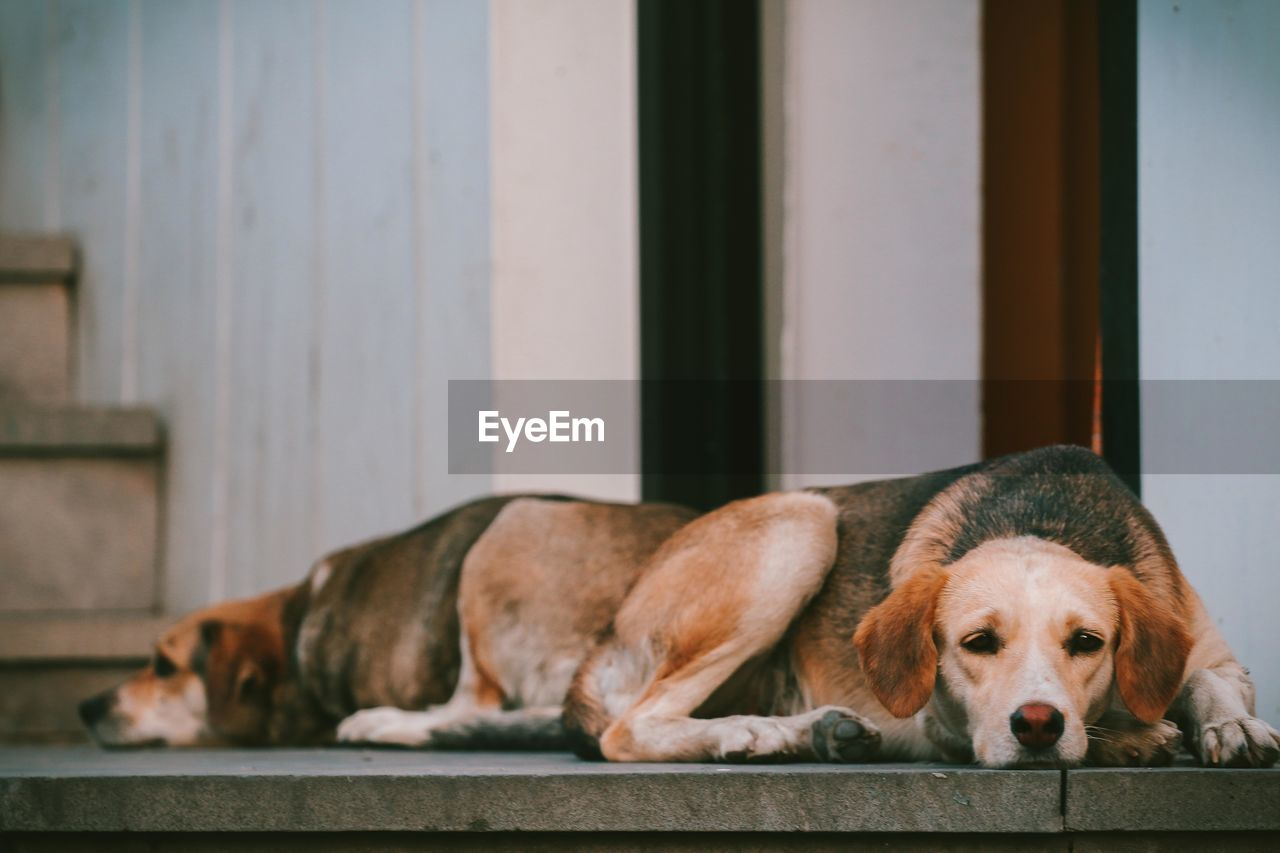 pets, domestic, domestic animals, mammal, canine, animal themes, dog, one animal, animal, relaxation, vertebrate, no people, indoors, focus on foreground, lying down, resting, home interior, day, sleeping, close-up