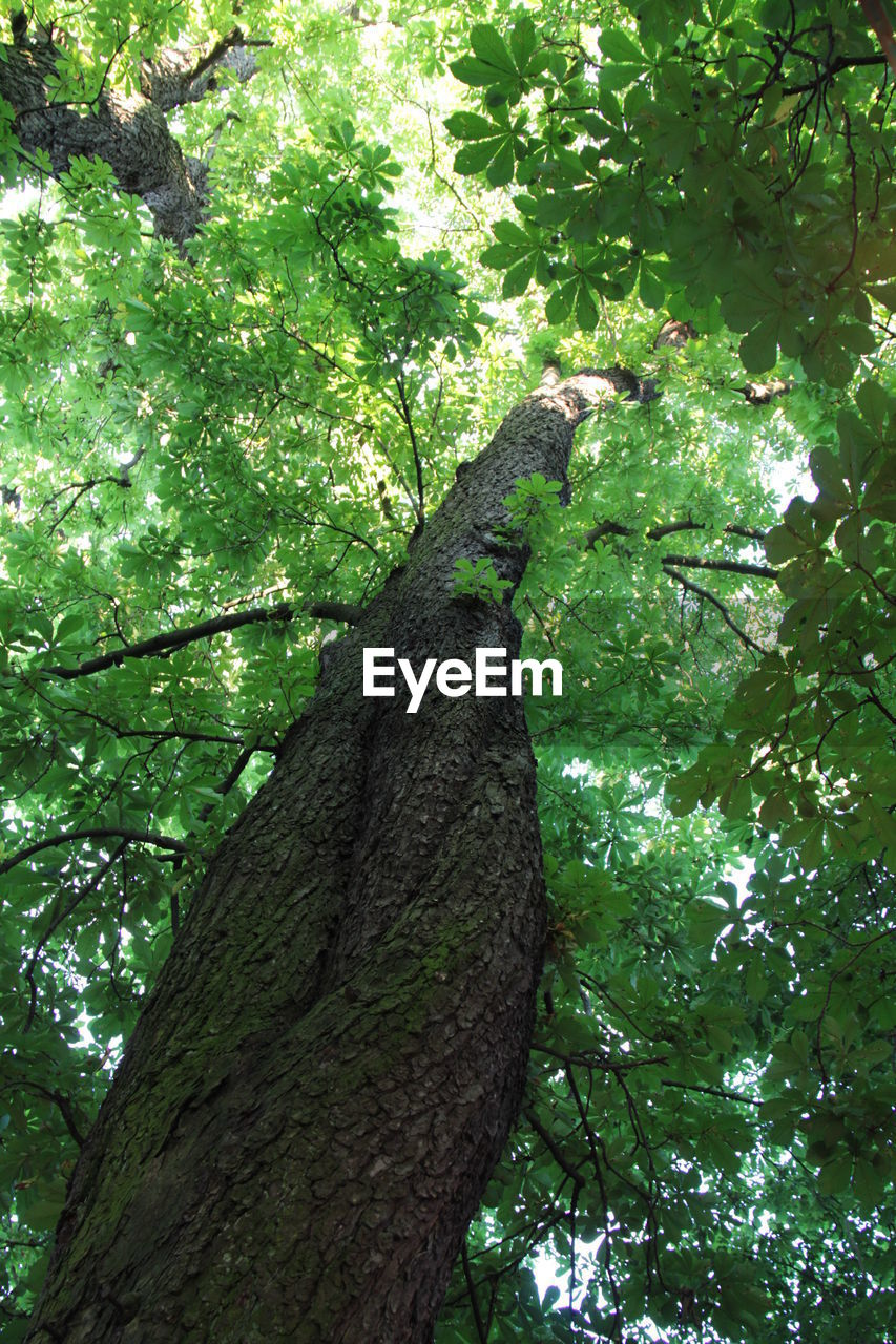 tree, green color, branch, nature, tree trunk, growth, no people, outdoors, day, low angle view, one animal, beauty in nature, animal themes, animals in the wild, climbing, close-up