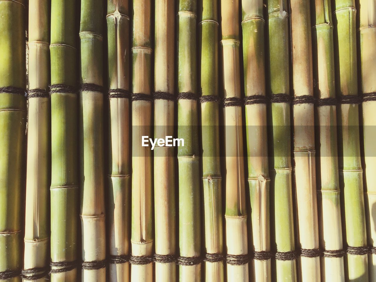 bamboo - plant, bamboo, bamboo grove, backgrounds, full frame, day, no people, bamboo - material, outdoors, close-up