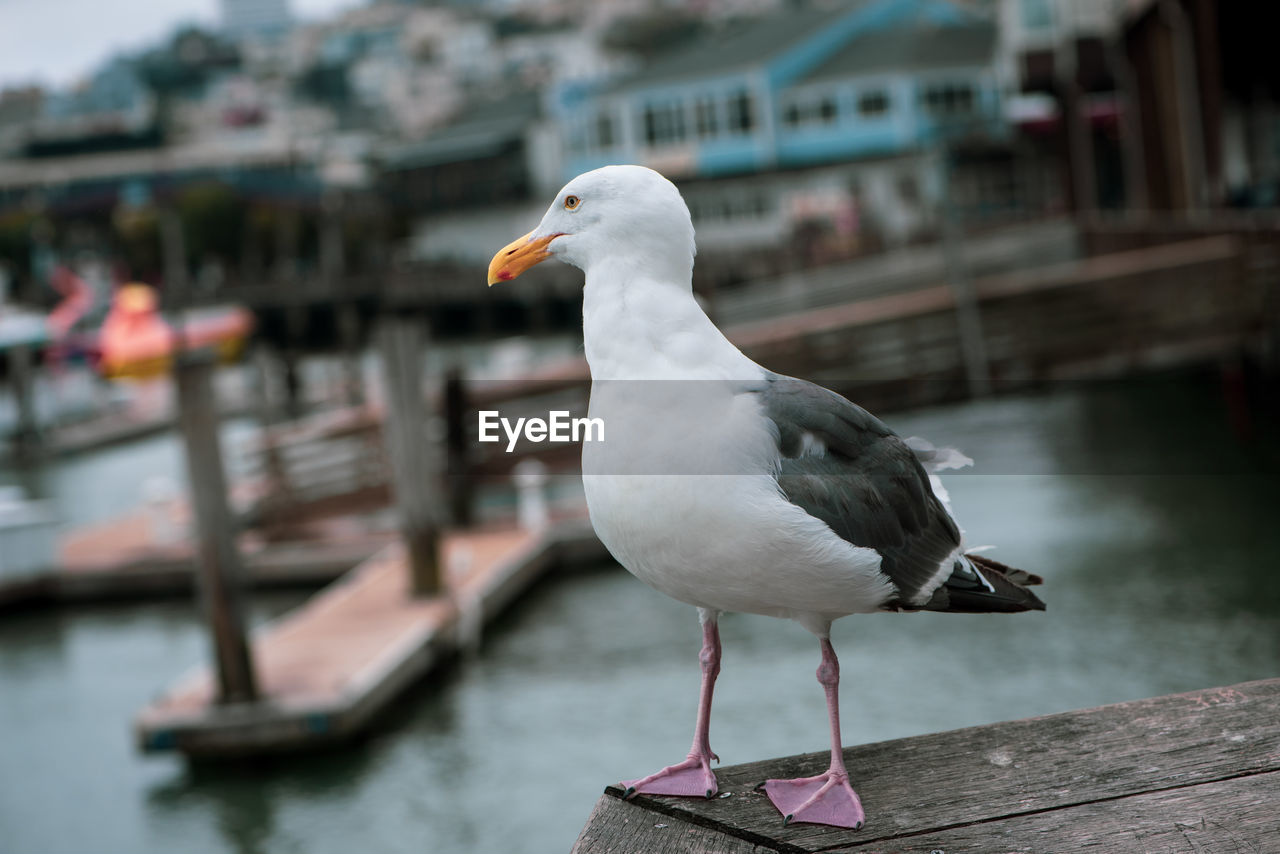 bird, vertebrate, water, one animal, animals in the wild, animal, focus on foreground, animal themes, animal wildlife, seagull, perching, architecture, built structure, nautical vessel, day, no people, building exterior, nature, close-up, outdoors, canal, wooden post