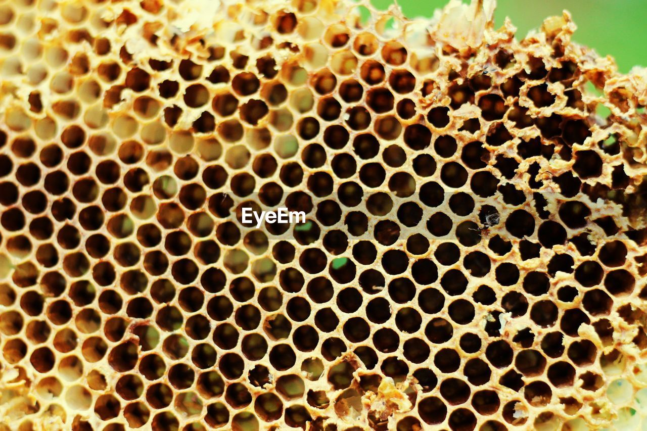 honeycomb, close-up, no people, pattern, beehive, backgrounds, full frame, bee, animals in the wild, apiculture, animal themes, geometric shape, textured, animal, animal wildlife, day, repetition, nature, detail, yellow