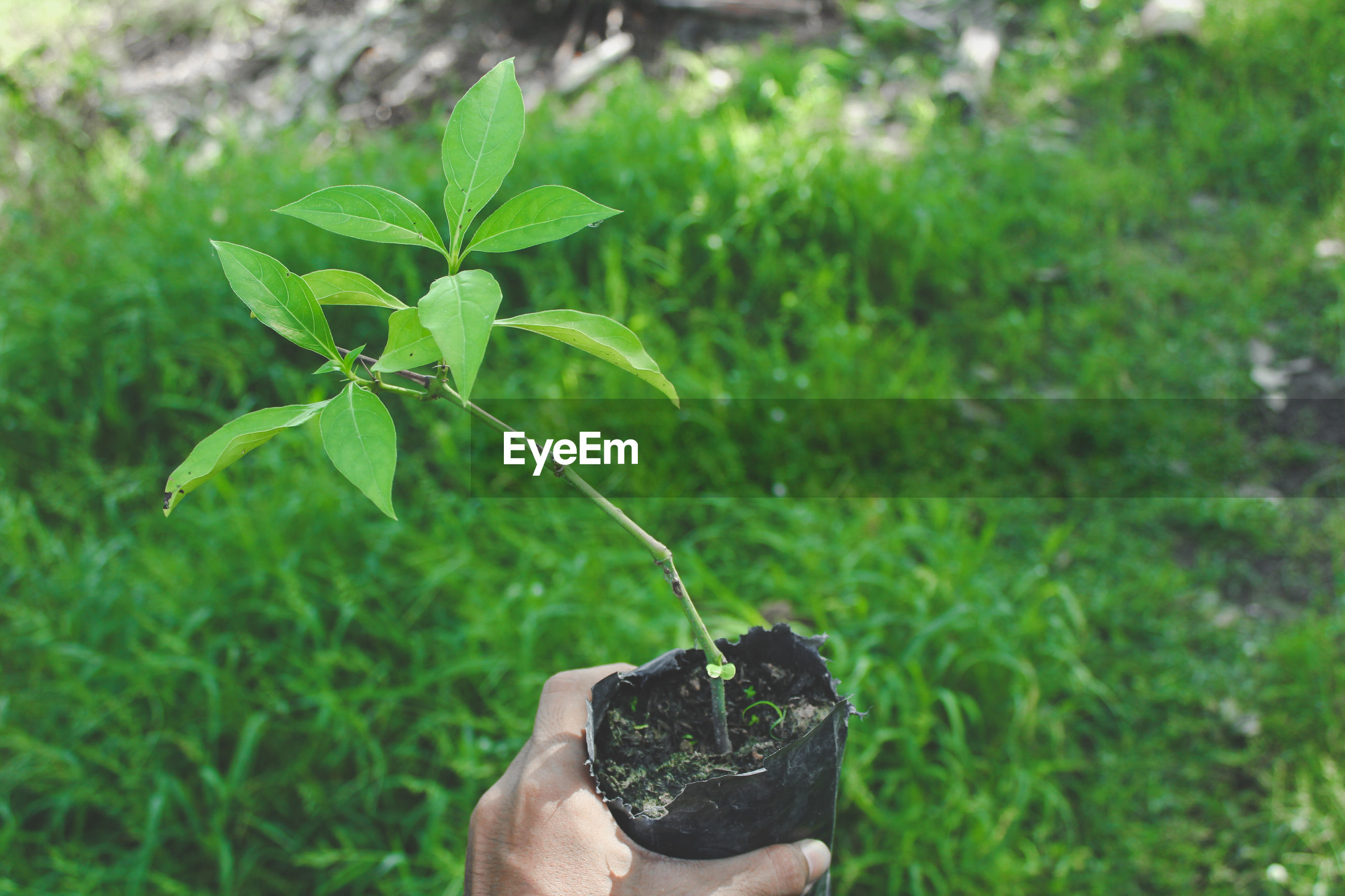 Cropped hand of person holding potted plant