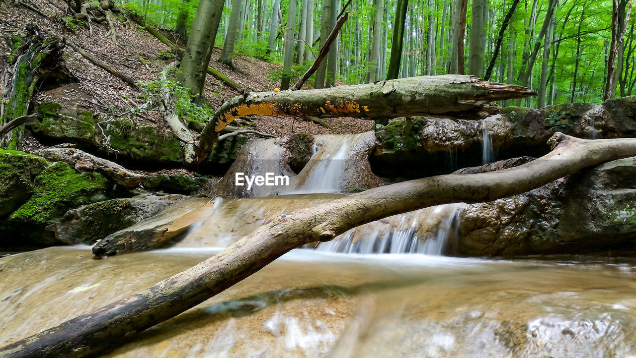 water, tree, forest, flowing water, waterfall, scenics - nature, beauty in nature, long exposure, motion, plant, flowing, nature, land, no people, rock, blurred motion, day, moss, rock - object, outdoors, falling water, stream - flowing water, rainforest