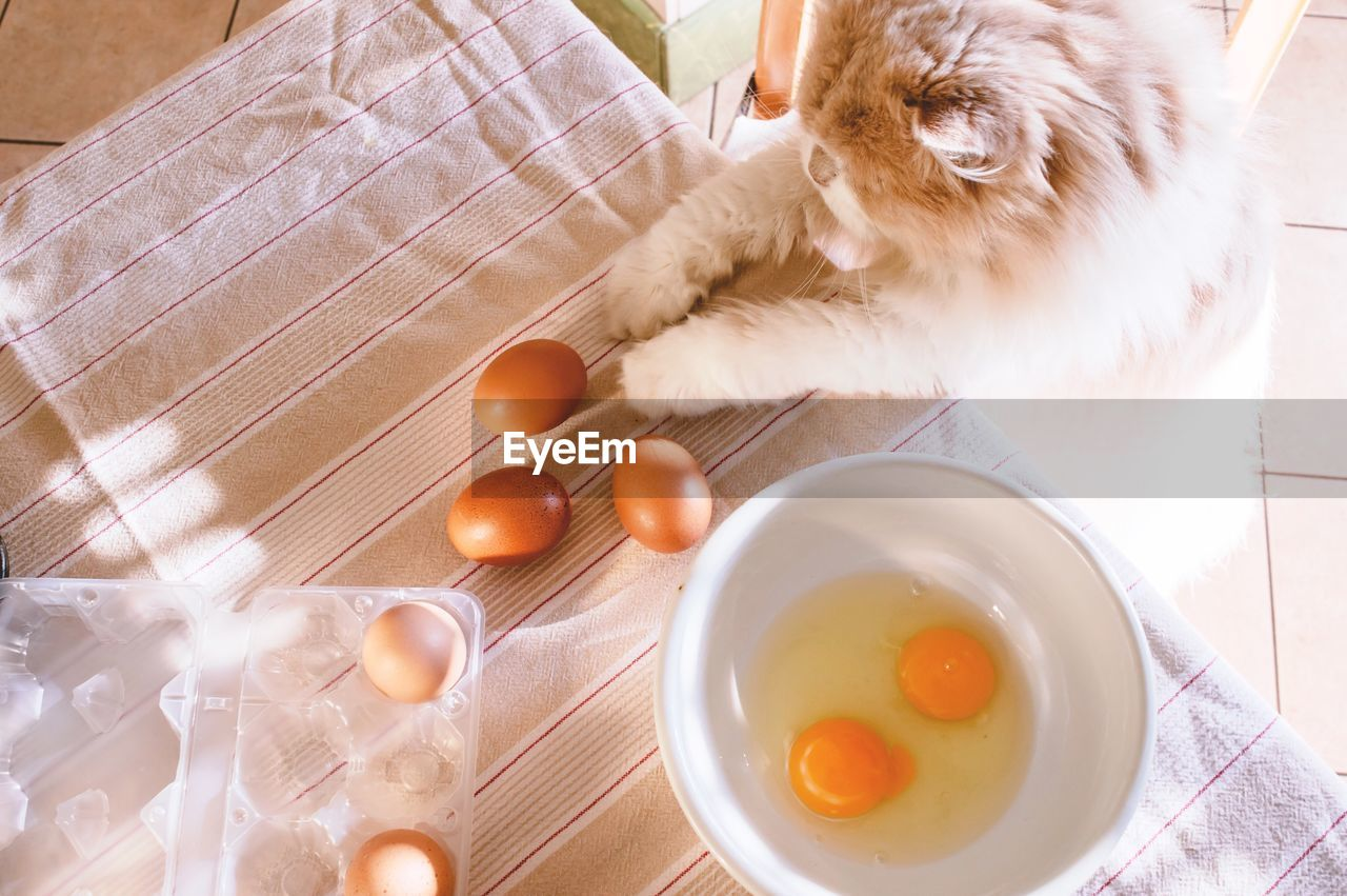 High Angle View Of Cat Leaning On Counter By Eggs