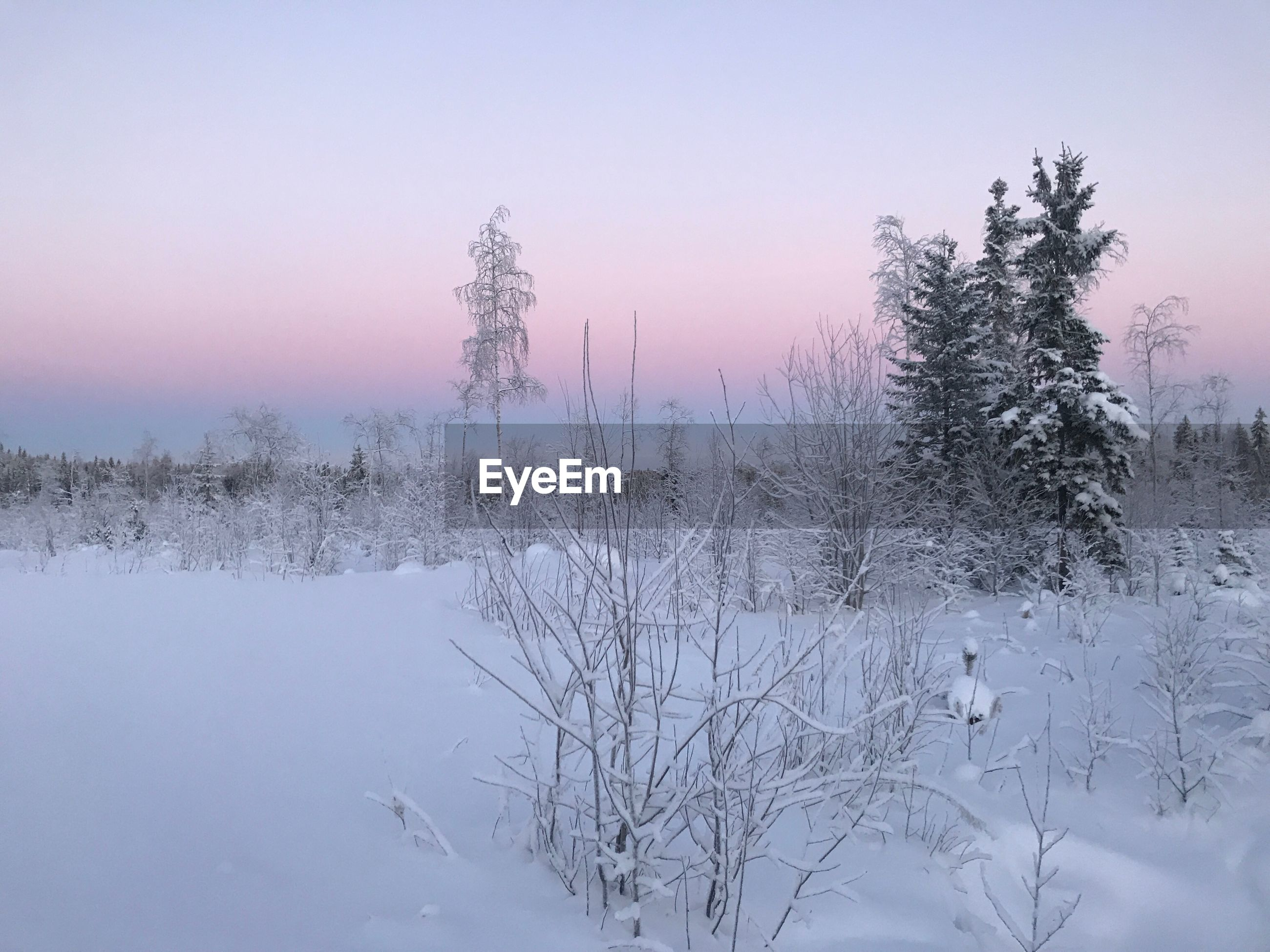 SNOW COVERED LAND AND TREES AGAINST SKY DURING WINTER
